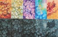 Flores nº 22-4-29-23-27